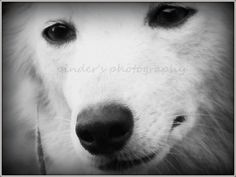 Dog is the only thing on earth that loves you more - Photography by Pinder Bal at touchtalent 78178 at touchtalent 78178