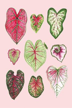 Leaf Drawing, Plant Drawing, Plant Illustration, Botanical Illustration, Botanical Drawings, Botanical Prints, Paper Plants, Plant Painting, Leaf Art