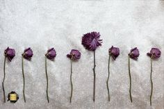 It's ok to not fit in. Floral Photography, Art Flowers, Art Floral, Fine Art, Purple, Fit, Visual Arts, Viola