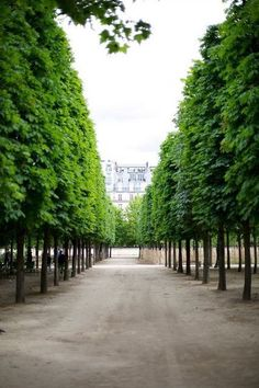 Chestnut trees (Spring leafing) the Tuileries Garden, Paris! Louvre Paris, Paris 3, Paris France, Paris Green, Tuileries Paris, Jardin Des Tuileries, Beautiful Paris, Most Beautiful Cities, Places To Travel