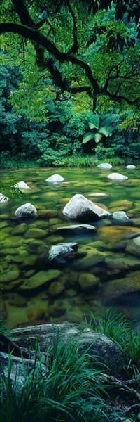 Beautiful woods stream...