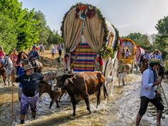 Members of the Triana brotherhood cross a river during the annual El Rocio pilgrimage in Huelva, Spain. Thousands of devotees in traditional outfits converge in a burst of colour as they make their way on horseback and decorated carriages across the Andalusian countryside. Learn more: http://www.touristeye.com/Make-the-Romeria-of-El-Rocio-p-659127