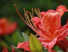 © crucifix marielle  #flower#green#garden#spring