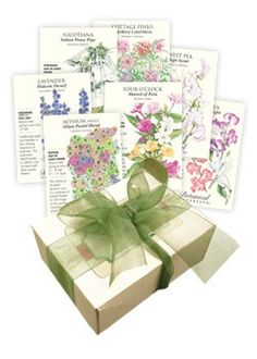 Fragrant Flower Seed Collection: A collection of flowers that is sure to delight your senses!