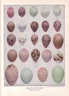 Eggs of American Birds - love the shades of eggs