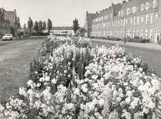 archipelweg jaren 50