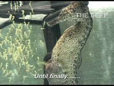 This is a truly awe inspiring video. One minute there are 2 seahorses. Then, all of a sudden, there are 1802.