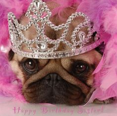 """Happy Birthday Blank Greetings Card Dogs Puppies """"Lots of cute designs to view!"""" 