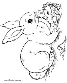 in this amazing coloring sheet a cute rabbit is eating salad and a - Fun Printable Coloring Pages