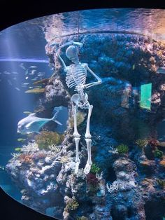 This is what Halloween in S.E.A. Aquarium looks like. Come on down this month to try out all our kid-friendly activities!