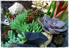 Our Little Acre: Northwest Flower & Garden Show: The Container Gardens