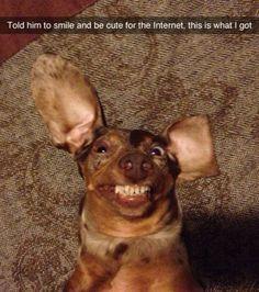 Ultra-Photogenic Dog