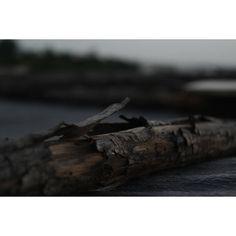 Worn out . . . . #wood #focus #blur #nature  #minimal #travel #_soi #photographer #instagram #everydayeverywhere #myshortstories #greatoutdoors #photography #photooftheday #all_shots #enjoylittlethings  #nikon #iamnikon #chasinglight #lifeofaphotographer  #fromwhereistand #dowhatyoulove #nothingisordinary  #mytinyatlas #justgoshoot #exploretocreate