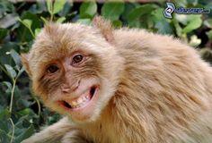 Affe, Lächeln