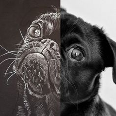 Portraits From Photos, Pet Portraits, Your Photos, Hand Drawn, Labrador Retriever, How To Draw Hands, Pencil, Hand Painted, Watercolor