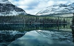Download wallpapers Lake O Hara, Mountain lake, forest, evening, mountains, Canadian Rockies, Hector, Canada, British Columbia