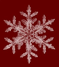 Beautiful snowflakes and tips on photographing them. Apple Watch Face Cover, Apple Watch Faces, Snowflake Photography, Macro Photography, Snowflake Photos, Real Snowflakes, Red Mug, Ice Crystals, Snow Fun