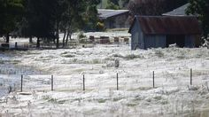 Spiders spin wet blanket over Wagga Wagga