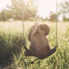 Swinging Baby Elephanto