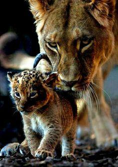 Mom and Cub ❤