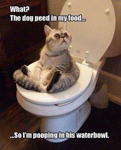 Cats and dogs haha