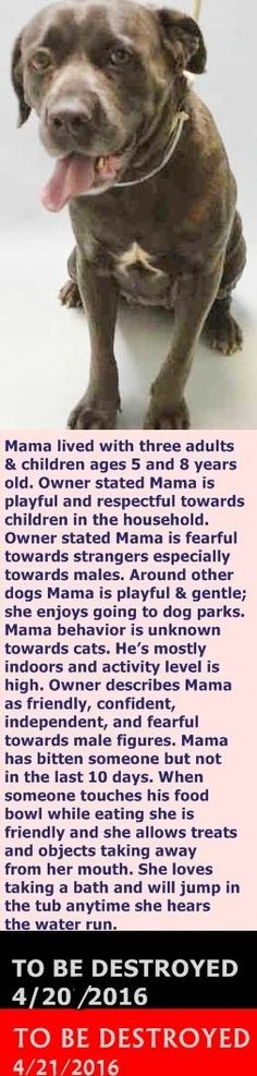 Brooklyn Center  My name is MAMA. My Animal ID # is A1070387. I am a female br brindle and white cane corso. The shelter thinks I am about 4 YEARS old.  I came in the shelter as a OWNER SUR on 04/15/2016 from NY 11212, owner surrender reason stated was MOVE2PRIVA. http://nycdogs.urgentpodr.org/mama-a1070387/