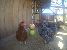 The girls enjoy their apples!