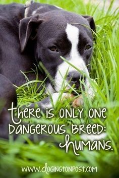 Dog quotes & Memes Citas y Memes de perros Especie Animal, Amor Animal, I Love Dogs, Puppy Love, Cute Dogs, Animal Quotes, Dog Quotes, Cane Corso, Animals And Pets