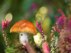 small mushroom with delicate pink flowers http://in-lakech-ala-kin.tumblr.com/post/6178934025