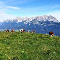 Wilder Kaiser mit Kühen – Bild des Monats im August 2019 Wilder Kaiser, Gadgets, Mountains, Nature, Travel, Cowbell, Cow Pictures, Voyage, Viajes