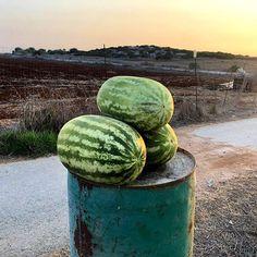 На Кипре в самом разгаре сезон арбузов. А какие фрукты вы любите больше всего?  #Cyprus2019 #Cyprus #CyprusButterfly Cyprus News, Watermelon, Fruit
