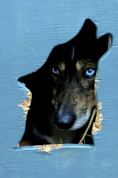 On rainy days, Molly sits in her doghouse and daydreams about running with wolves...  ~~  Houston Foodlovers Book Club
