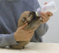 Aleitamento artificial para pets, como amamentar filhotes que perderam sua mãe ou foram abandonados