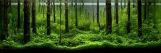 2010 International Aquatic Plants Layout Contest