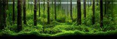 The International Aquatic Plants Layout Contest 2010 -Pavel Bautin (Russia)