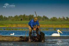 Prohibitie pescuit 2020 - Ordinul publicat in Monitorul Oficial - Info-Delta. Monitor, Google, Wels