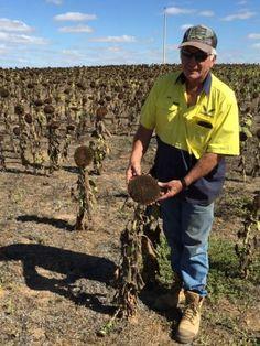 Farmer John Lush from Mallala in South Australia