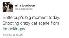 #Mockingjay producer Nina Jacobson confirms the #Buttercup crazy cat scene is being filmed today on the set!