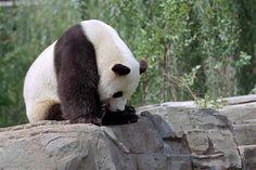 """I'm a sad panda..."" www.pandathings.com"