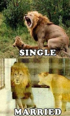 The Truth   #truth #pics #life #fantastic #man #woman #doityourself #follow #crazy #shit #sex #all #single #married #game #over #no balls #lion #fun #funny #life #is #selfmade #addme #youtube #vip #creative #inspired #followme #sugoi #sugoiwhat #super #nice #tagme #tag