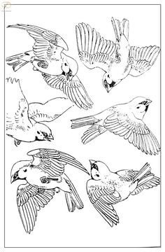 Ideas For Tattoo Watercolor Bird Drawings Bird Crafts, Bird Nest Craft, Bird Drawings, Animal Drawings, Watercolor Bird, Watercolor Paintings, Tattoo Watercolor, Bird Sketch, Japanese Tattoo Art