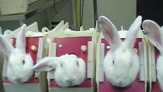 Ban on animal testing for cosmetics in Brazil
