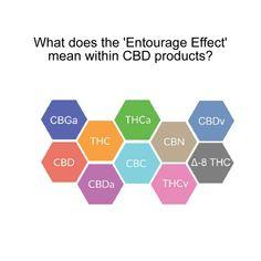 What is Entourage Effect CBD Oil? - The Botanical Garden Entourage, How Are You Feeling, Oil, News, Garden, Garten, Lawn And Garden, Gardens, Tuin