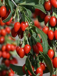 Superalimentos para cultivar en el jardín 6