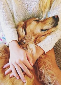 Golden retriever hugs