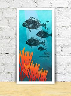 Tamure limited edition print – New Zealand native fish series Paint Background, Fish Print, Limited Edition Prints, All Print, New Zealand, Nativity, How To Draw Hands, Fiction, Painting