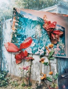 Stephen Gill  I have looked at Stephen Gill before in a previous project and like his work. His collection 'hackney flowers' where gill uses pressed flowers as layers on top of his photographs would be a good starting point for the project 'growth and evolution'.