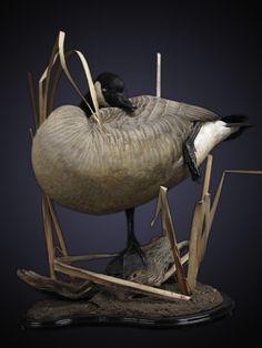 Wood Duck Mounts Ideas Google Search Taxidermy Ideas