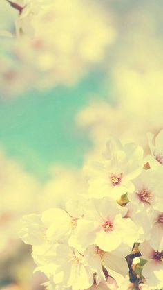 Muted flowers against a blue sky background. iPhone Wallpaper - specially sized & shaped to fit the screen of your iPhone.