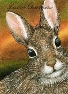 Bunny rabbit by Lucie Dumas